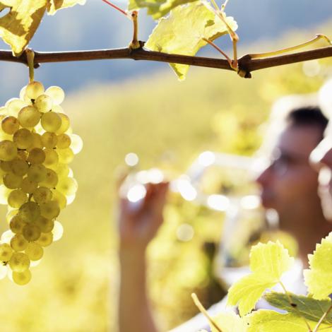 Wine-shutterstock_69763123